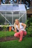 Mujer que cultiva un huerto joven con los rastrillos en el jardín Fotografía de archivo libre de regalías