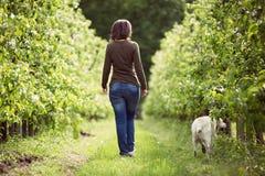 Mujer que da un paseo con una huerta Labrador Fotografía de archivo libre de regalías