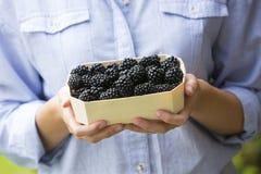 Mujer que detiene a Tray Of Fresh Blackberries Imagenes de archivo