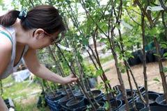 Mujer que elige almácigos de plantas Imágenes de archivo libres de regalías