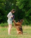 Mujer que entrena a su golden retriever del perro en el parque Fotografía de archivo libre de regalías