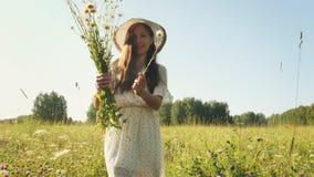 Mujer que escoge manzanillas en el prado en la mañana metrajes