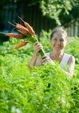 Mujer que escoge zanahorias frescas Fotos de archivo libres de regalías