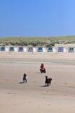 Mujer que filma sus perros en la playa Imágenes de archivo libres de regalías