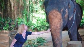 Mujer que frota ligeramente un elefante en una granja en la selva asiática almacen de metraje de vídeo