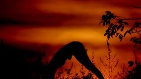 Mujer que hace yoga en la puesta del sol almacen de metraje de vídeo