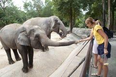 Mujer que introduce el elefante Imagen de archivo libre de regalías