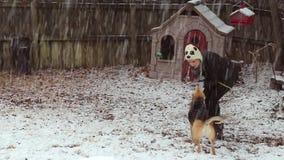 Mujer que juega con dos perros en la nieve almacen de metraje de vídeo