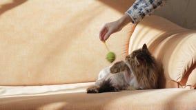 Mujer que juega con el gato que miente en el sofá metrajes