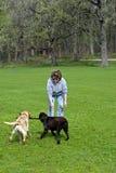 Mujer que juega con los perros Foto de archivo libre de regalías