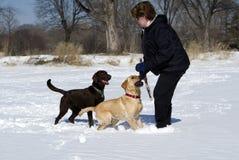 Mujer que juega con los perros en la nieve Imágenes de archivo libres de regalías