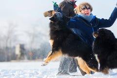 Mujer que juega con los perros en la nieve Fotos de archivo libres de regalías