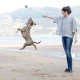 Mujer que juega y que entrena de su perro. Fotografía de archivo