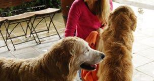 Mujer que limpia su perro con una toalla 4k metrajes