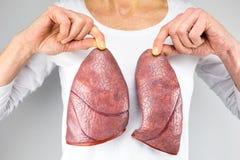 Mujer que lleva a cabo dos modelos del pulmón delante del pecho Imágenes de archivo libres de regalías