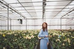 Mujer que mira las flores en naranjal Fotografía de archivo libre de regalías