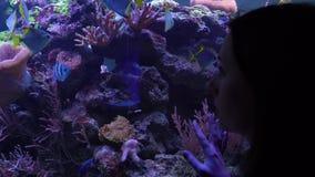 Mujer que mira los pescados en el acuario almacen de metraje de vídeo