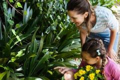 Mujer que mira mientras que hija que se sienta en la carretilla que señala hacia las plantas fotos de archivo libres de regalías