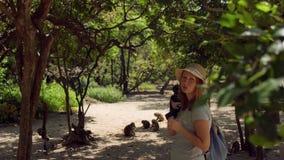 Mujer que mira un mono de macaque que se sienta en el árbol Isla del mono, Vietnam almacen de video