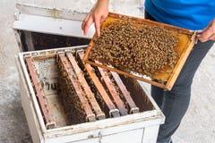 Mujer que muestra abejas en la colmena y el panal en Rayong Fotos de archivo libres de regalías