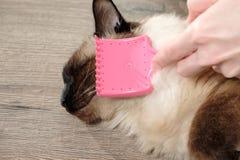 Mujer que peina el gato imagen de archivo
