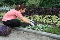 Mujer que planta hacia fuera lobelias Foto de archivo libre de regalías