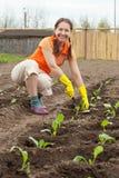Mujer que planta la col Foto de archivo libre de regalías