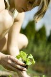 Mujer que planta la planta de semillero Fotografía de archivo