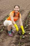 Mujer que planta la planta de semillero de la col Imágenes de archivo libres de regalías