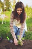 Mujer que planta las flores Imagenes de archivo