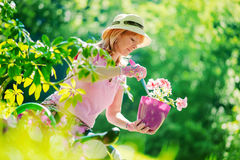 Mujer que planta las flores Fotos de archivo