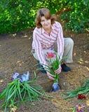 Mujer que planta las flores en jardín Fotografía de archivo libre de regalías