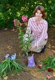 Mujer que planta las flores en jardín Fotos de archivo libres de regalías