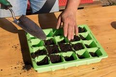 Mujer que planta las semillas del maíz verde en el suelo fértil, jardín Fotografía de archivo libre de regalías