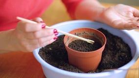 Mujer que planta las semillas en un pote almacen de metraje de vídeo