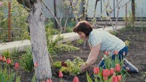 Mujer que planta una planta metrajes