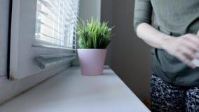 Mujer que pone las plantas verdes decorativas en macetas en un travesaño de la ventana, cuidando para las plantas andcreating com almacen de video