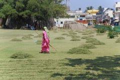 Mujer que rastrilla la hierba segada Imagen de archivo libre de regalías