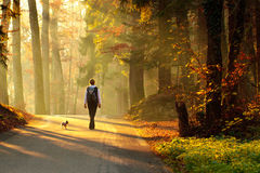 Mujer que recorre en bosque del otoño Imagen de archivo libre de regalías