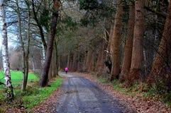 Mujer que recorre en el bosque Imagen de archivo libre de regalías