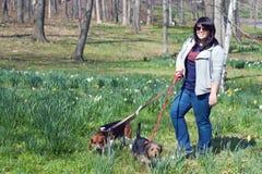 Mujer que recorre sus perros Fotografía de archivo