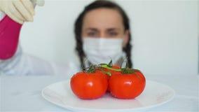 Mujer que roc?a los tomates de GMO con las sustancias qu?micas almacen de metraje de vídeo