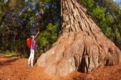 Mujer que señala en el árbol grande en la secoya California Fotografía de archivo libre de regalías