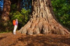 Mujer que se coloca cerca de árbol grande en la secoya California Foto de archivo libre de regalías