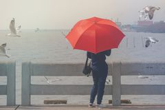 Mujer que se coloca en el puente concreto, ella que sostiene el paraguas rojo y que mira el mar y las gaviotas que vuelan en el c Foto de archivo
