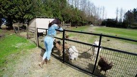 Mujer que se inclina en la cerca de la granja y que mira las cabras 4k almacen de video
