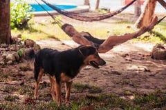 Mujer que se relaja en hamaca con el perro Imágenes de archivo libres de regalías