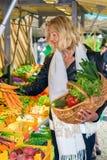 Mujer que selecciona un manojo de zanahorias frescas Fotos de archivo libres de regalías