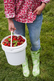 Mujer que sostiene el cubo de fresas frescas Foto de archivo