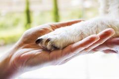 Mujer que sostiene la pata del perrito Fotografía de archivo
